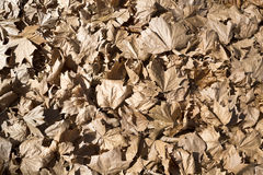 Fallen Maple Tree Leaves Stock Photo