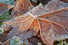 fallen natur för makro för frostbildleaf Royaltyfri Fotografi