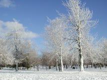 fallen ny snow arkivfoto