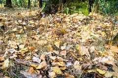 Fallen oak and birch leaves close up in urban park royalty free stock photos