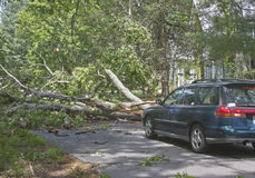 Fallen Oak Tree Stops Traffic Royalty Free Stock Photos