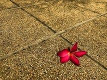 Fallen old flower. Surely old flower fallen on the floor stock photography