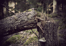 Fallen old tree Royalty Free Stock Photography