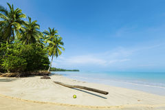 Fallen palm tree. On a sand of the tropical beach stock image