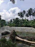 Fallen palm tree trunks lying in a shallow river on Mindoro, Philippines royalty free stock photos