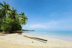 Fallen palmträd Fotografering för Bildbyråer