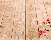 Fallen petals Stock Image