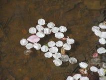Fallen petals Royalty Free Stock Photo