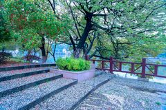Fallen petals lie in profusion-Nanchang Mei Lake Scenic Area. Nanchang Mei Lake scenic spot in detail, refined garden, curved Pavilion, platform and other types stock image