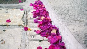 Fallen petals. On the street royalty free stock photography
