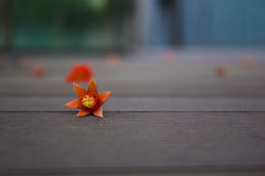 Fallen petals on wood floor,lost memery. Flowers faded on wood floor,sadness stock photo