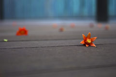 Fallen petals on wood floor,lost memery. Flowers faded on wood floor,sadness royalty free stock photo