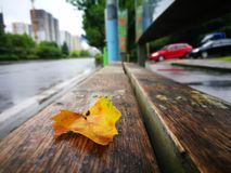 Fallen Phoenix tree leaf lying on wet ground Royalty Free Stock Photos