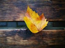 Fallen Phoenix tree leaf lying on wet ground Royalty Free Stock Images