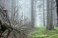 Fallen pine Stock Images