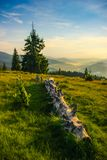 Fallen pine tree on alpine landscape. With green grass and blue sky and sunset Royalty Free Stock Photos