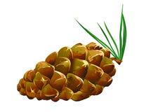 fallen pinecone Royaltyfria Foton