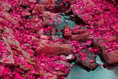 Fallen pink maples leaves in a creek Royalty Free Stock Photos