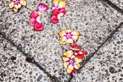 Abstract Cannonball tree flowers background Stock Photography