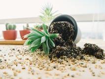 Fallen pot plant on desk. Stock Images