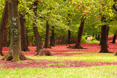 Fallen red foliage. Withered red foliage fallen to the ground in autumn Royalty Free Stock Photography