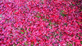 Fallen red leaves. Autumn background royalty free stock photos
