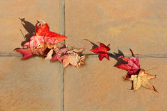 Fallen red leaves on the floor. Autumn motive. Royalty Free Stock Photo