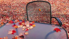 Free Fallen Red Maple Leaves On The Chair, Table And Ground Of Empty Patio. Stock Photo - 129414070
