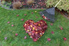 Fallen Leaves Raked into Heart Shape on Green Grass Lawn Stock Image