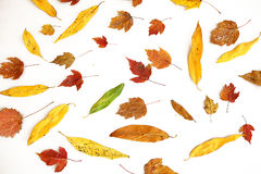 Fallen red and yellow leaves Royalty Free Stock Images