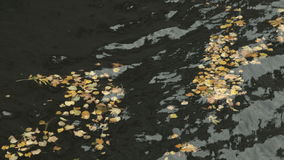 Fallen into the river yellow autumn leaves stock video footage