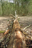 Fallen rotting tree Stock Photo