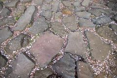 Fallen sakura petals on the ground with rocks after spring cherry blossom come to end royalty free stock photography