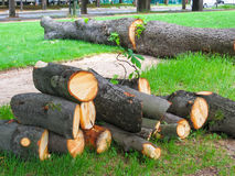 Fallen and sawn tree on lawn Royalty Free Stock Photography