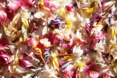 Fallen scattered colored flower petals blurred background close up royalty free stock image
