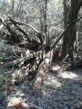 fallen skogtree Royaltyfria Bilder