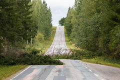 Fallen spruce trees laying on a country road after a summer storm Stock Image