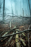 Fallen by storm trees in forest Royalty Free Stock Photos