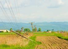 Fallen telephone poles on the field Stock Photo