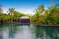fallen trädgårds- maldives pool litet tropiskt Arkivbild