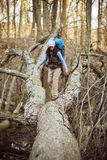 Fallen Tree. Hiker walking across fallen tree in woods Royalty Free Stock Image
