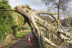 Fallen Tree. Storm damaged Tree across a Riverside Footpath Royalty Free Stock Images