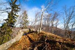 fallen tree Arkivbild