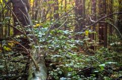 Fallen tree Royalty Free Stock Photography