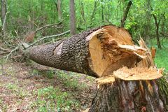 Fallen Tree Stock Photos