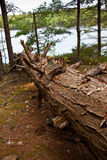 Fallen Tree Royaltyfri Bild