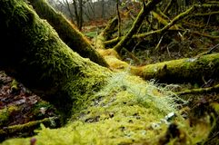 Fallen Tree Royalty Free Stock Photos