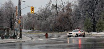 Fallen Tree Stock Photo