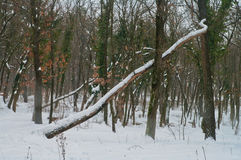 fallen tree Royaltyfri Fotografi