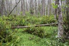 fallen tree Arkivfoto